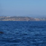 Family Guide to the 2014 Dana Point Harbor Festival of Whales