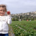 U-Pick Strawberries at South Coast Farms