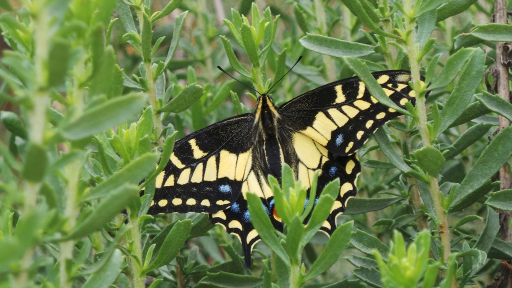 Butterfly along hiking trails in Orange County