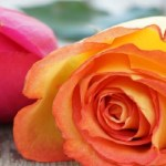 Surprise Mom with Flowers and Berries on Mother's Day