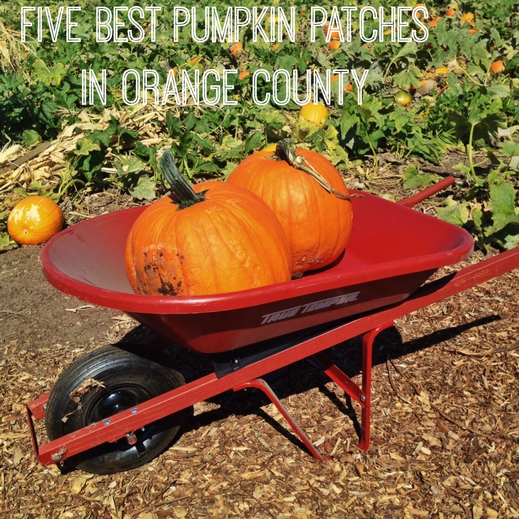 Best-Orange-County-pumpkin-Patches