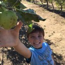 Best Places for Apple Picking in Southern California