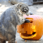 OC Halloween Zoo-Tacular Animal Celebration