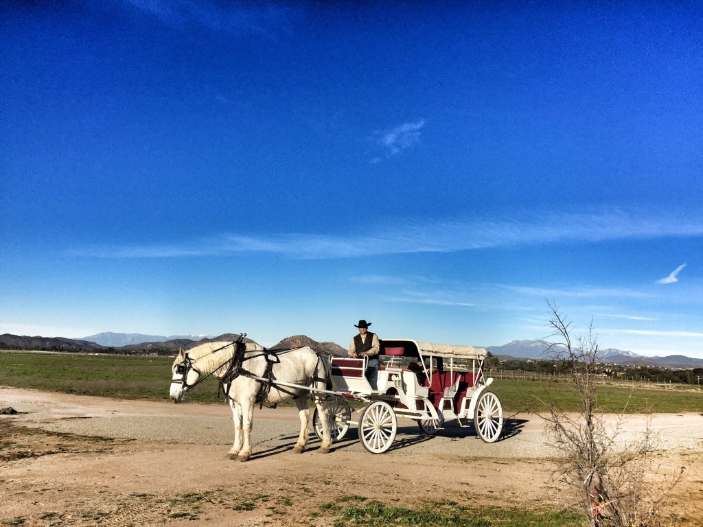 Romantic Horse Carriage Ride