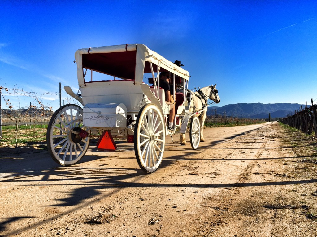 Horse Carriage Ride in Temecula Vineyard