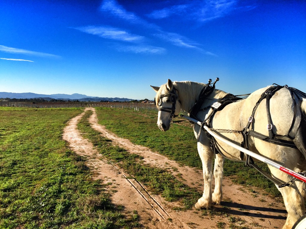 Horse Carriage Ride in Temecula