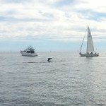Dana Wharf Whale Watching Is a SoCal Must Do