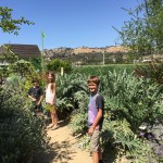 Celebrate Earth Day Every Day at The Ecology Center