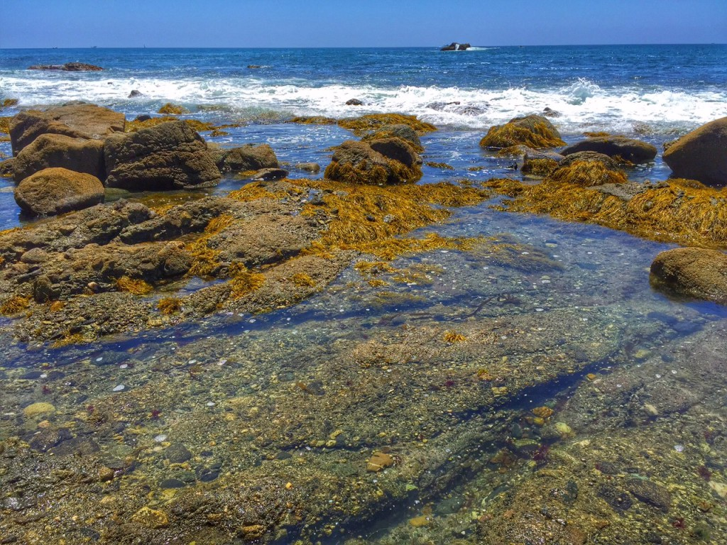 Dana Point Tide pools behind the Ocean Institute