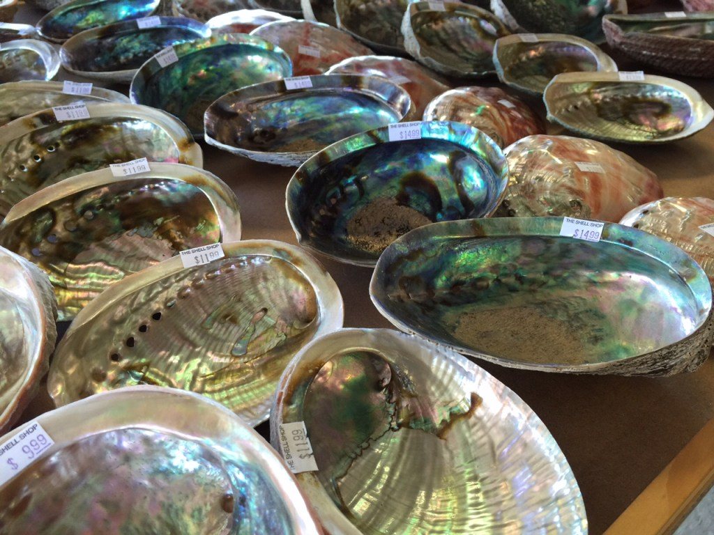Large collection of  abalone Shells