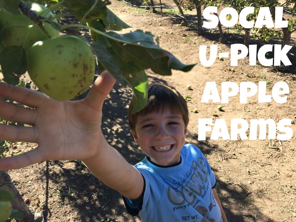 applepickingsocal1