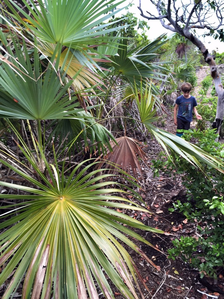 Kid hiking in the tropical forest of the turks and caicos