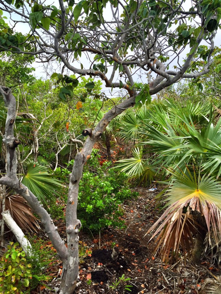 Hiking through the tropical landscape of the Turks and Caicos