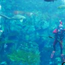 Holiday Treats at The Aquarium of the Pacific (Giveaway)