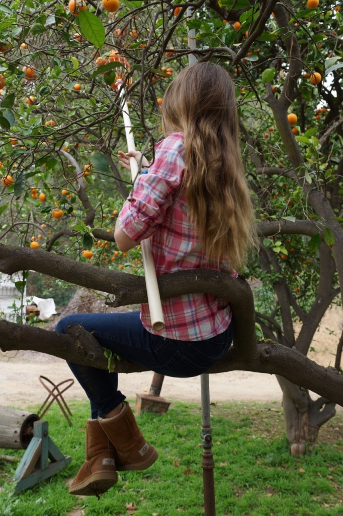 Orange picking from a tree