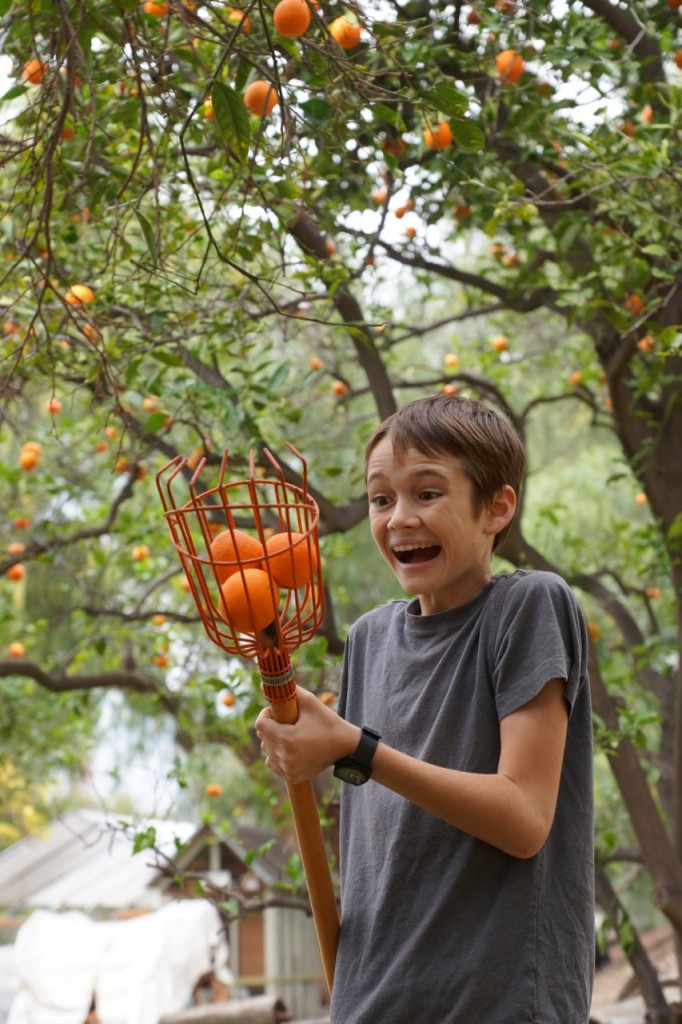 The excitement of picking oranges