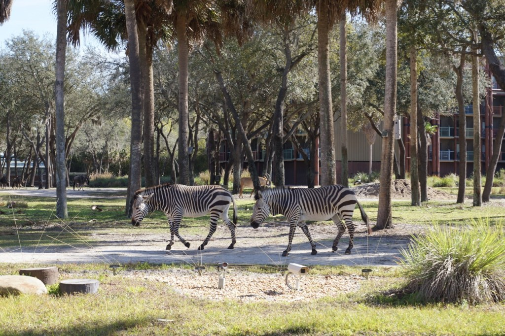 african animals in florida