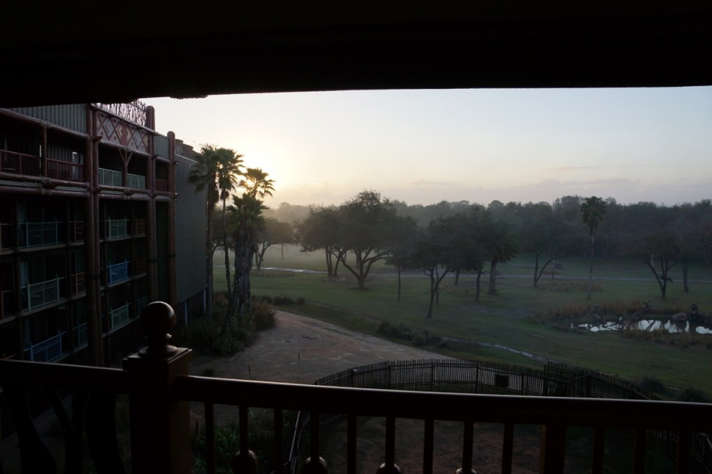 view of savanna from Animal Kingdom Room