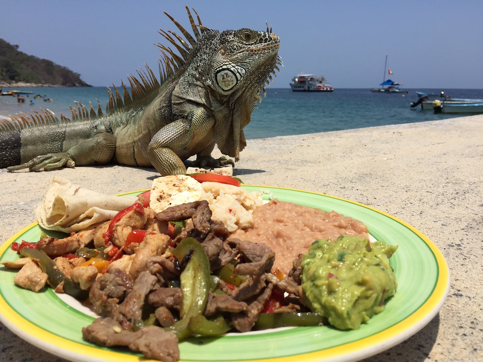 Lunch with an Iguana at Las Animas Beach