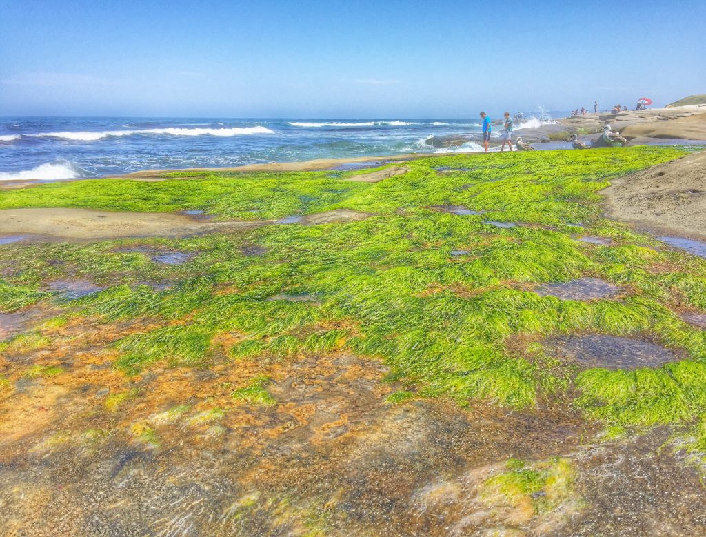 moss on the rocks in La Jolla
