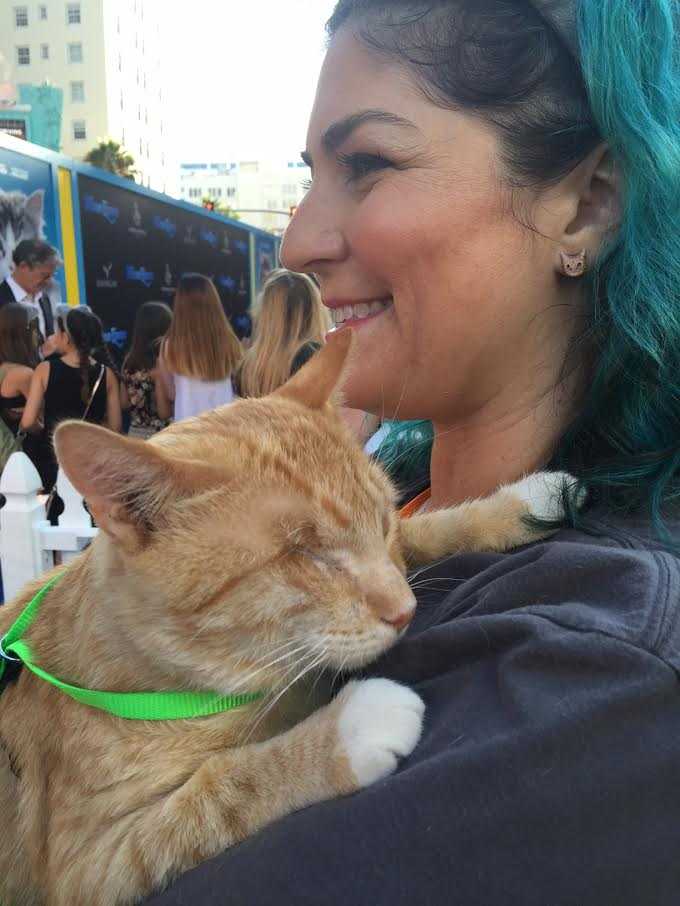 Cat available for adoption at the Nine Lives Premiere