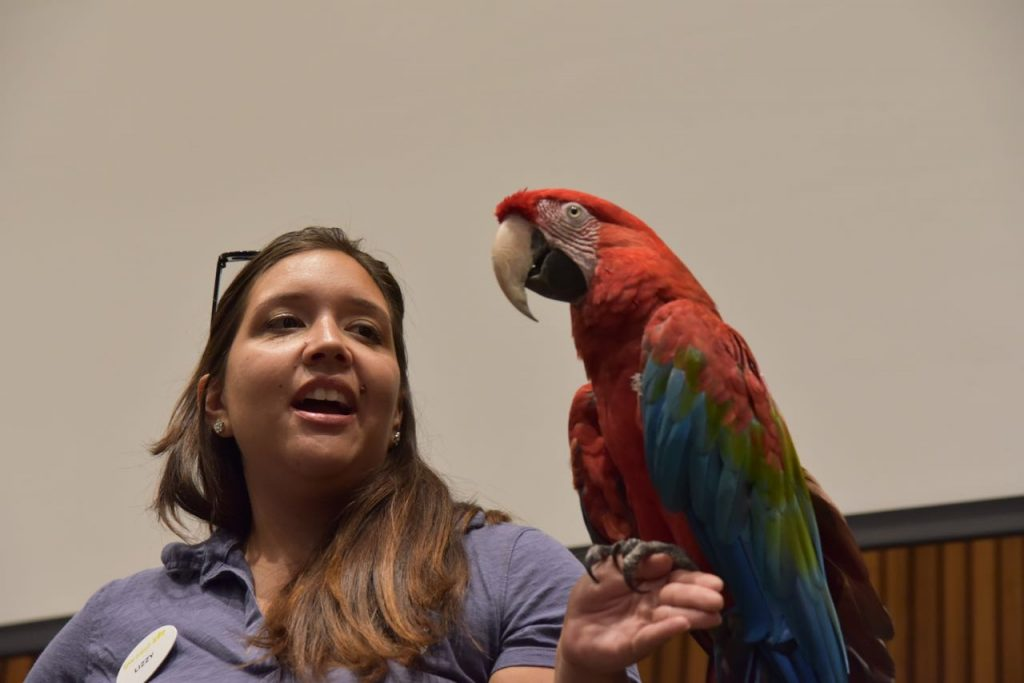 parrot-at-the-san-diego-zoo