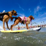 2016 Surf City Surf Dog Competition
