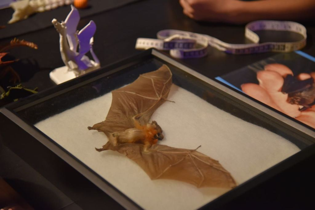 learning-about-bats-at-spooky-science-at-discovery-cube