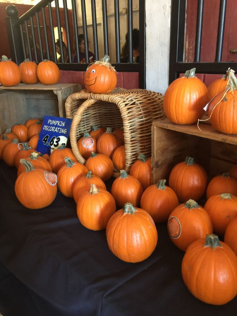 pumpkin-decorating-at-knotts-spooky-farm