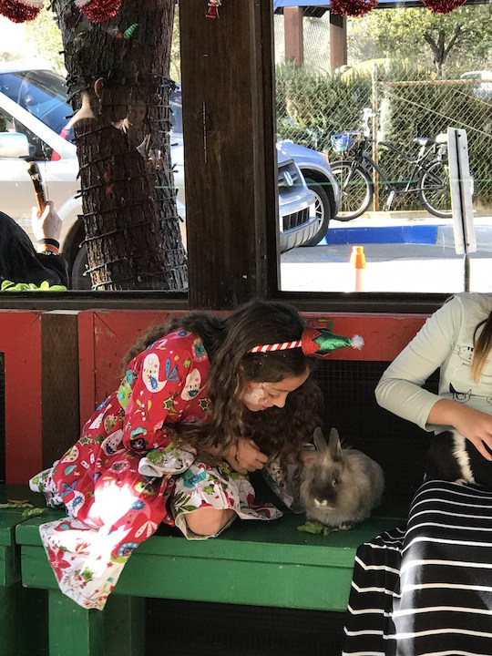 Animal love at the Sawdust Festival