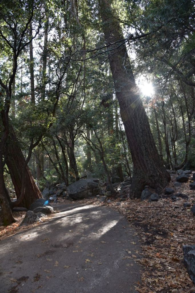 Best hiking trail for young children in Yosemite