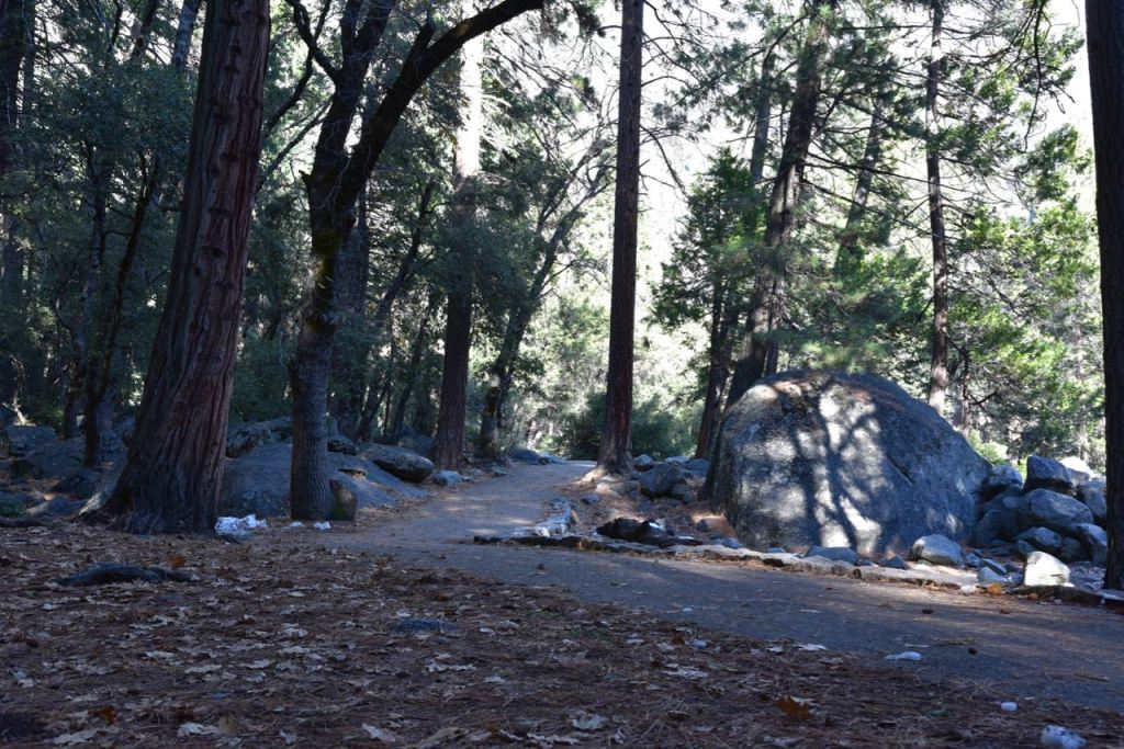 Exploring Lower Yosemite Falls Trail