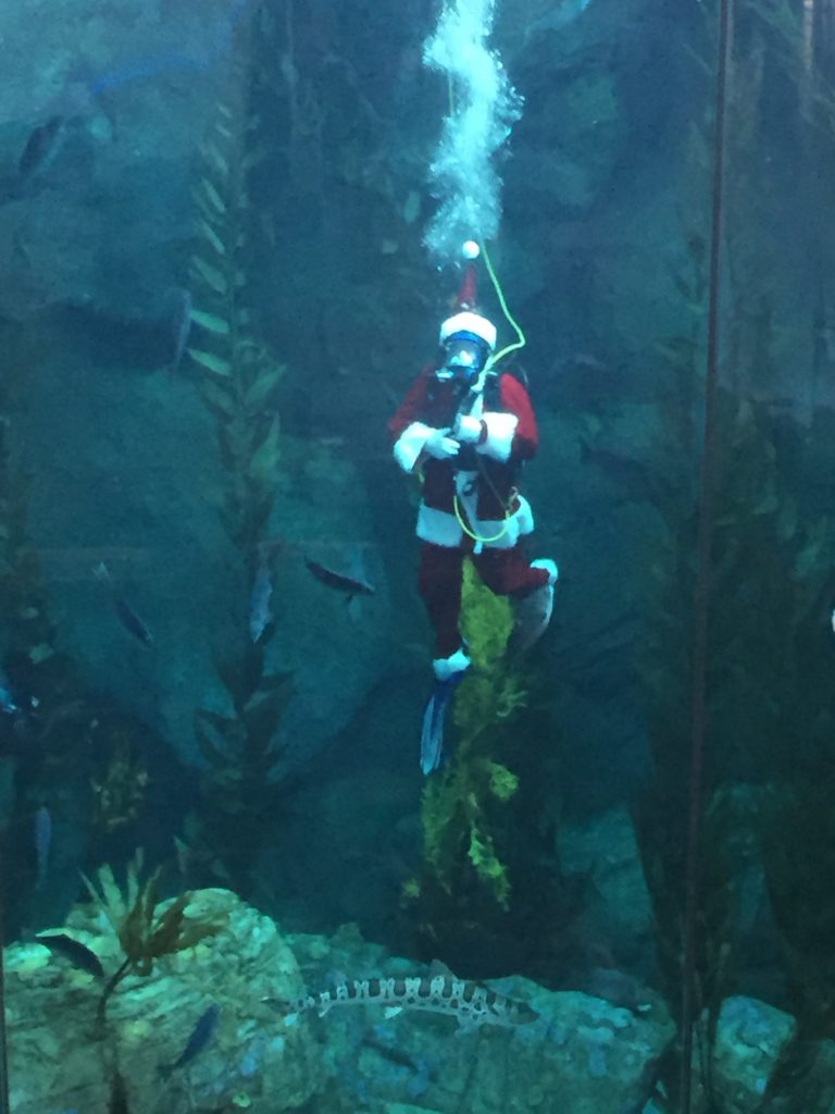 Santa Diving at The Aquarium of the Pacific
