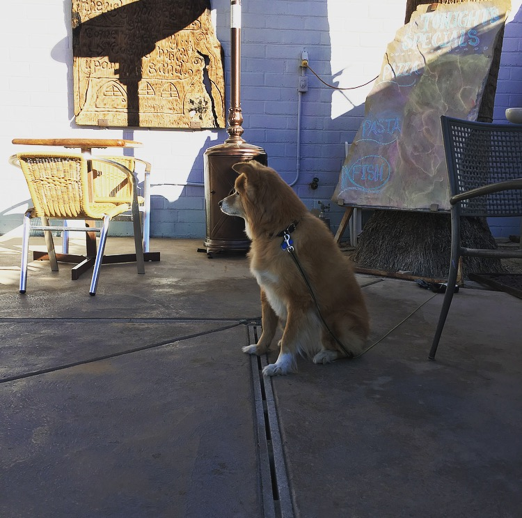 Dog visiting 29 Palms in Joshua Tree