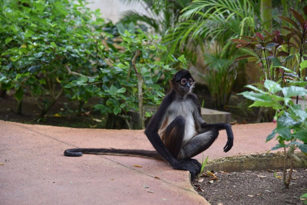 Interacting with a wild monkey in Mexico