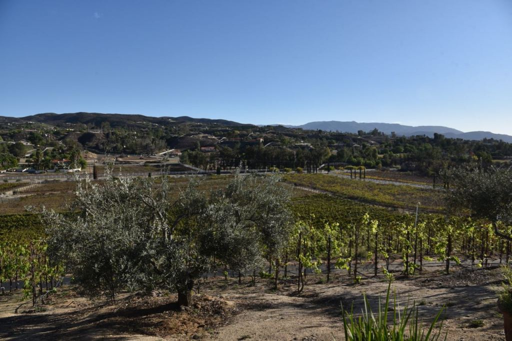 View from Cougar Winery in Temecula