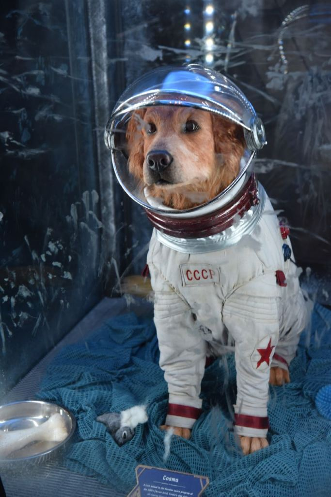 Easter Eggs & Fun Facts about Guardians of the Galaxy ... Cosmo The Dog Guardians Of The Galaxy
