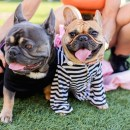 Yappy Howl-O-Ween at The Ritz-Carlton, Laguna Niguel