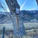 Carson Valley: The Hanging Tree in Genoa Nevada
