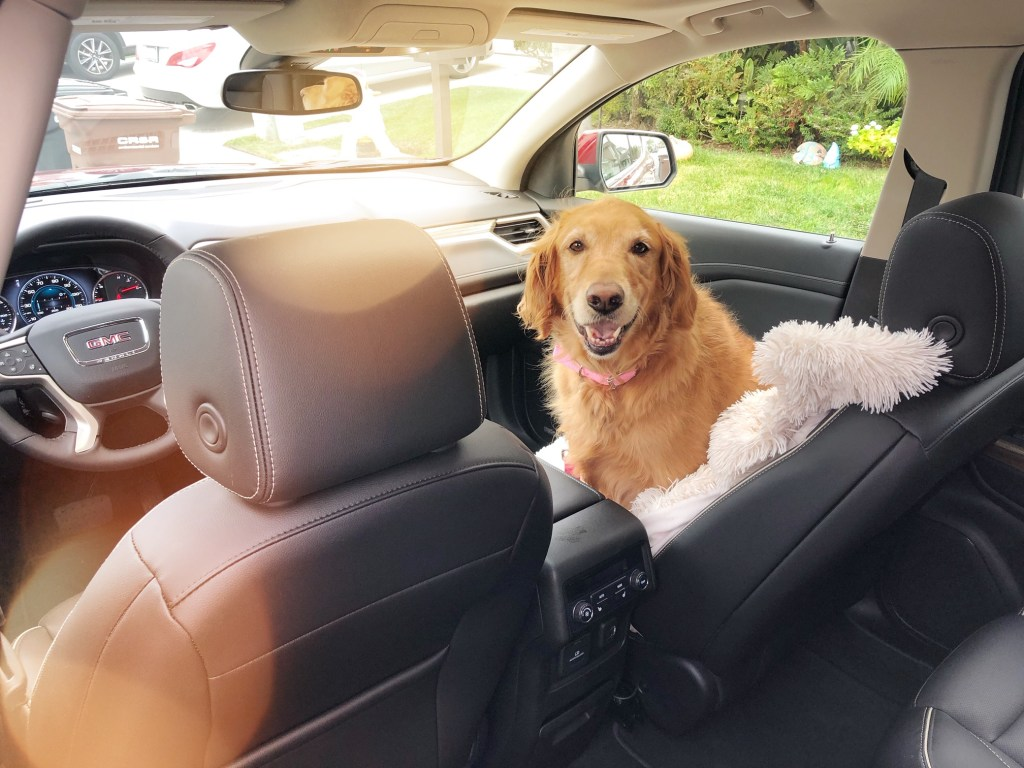 Driving with a dog in a GMC Acadia Denali on our way to Ojai