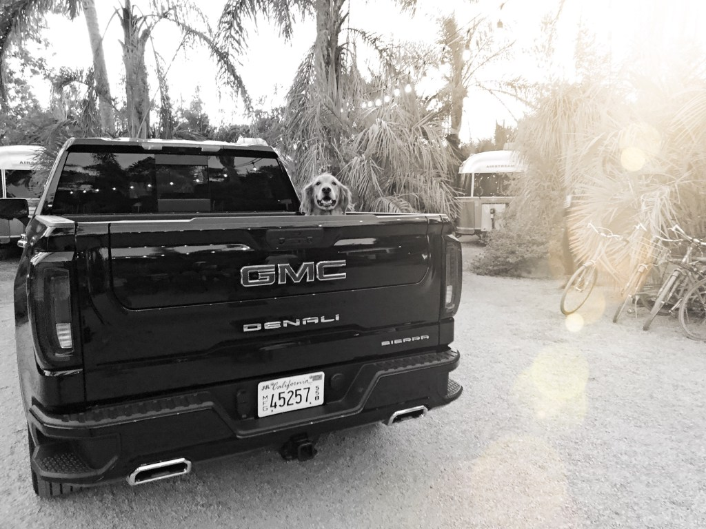 Dog hanging out in the back of a GMC Denali Sierra at Caravan Outpost in Ojai