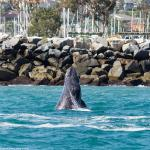 48th Annual Festival of Whales