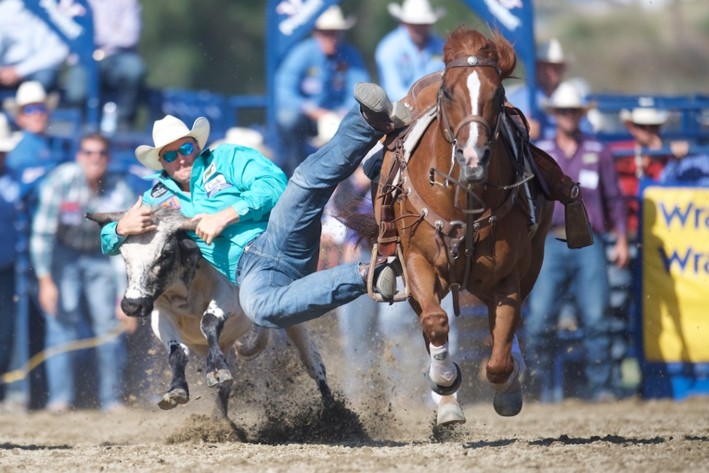 Steer wrestling at the Rancho Mission Viejo Rodeo