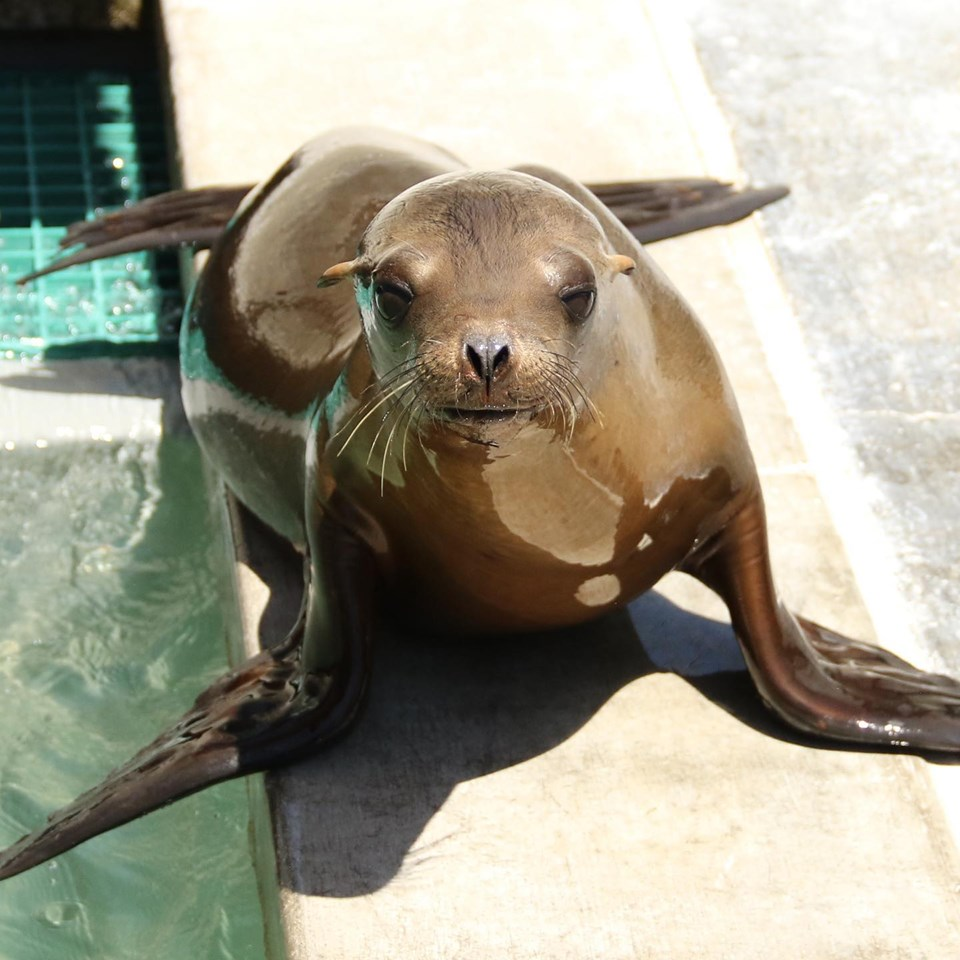 Cute sea lion in Laguna Beach
