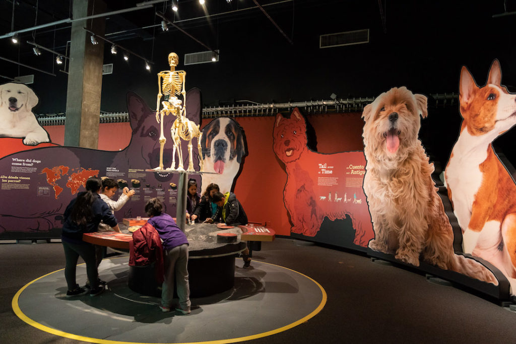 Science of Dogs Exhibit