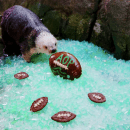 Aquarium of the Pacific Otter Bowl