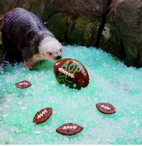Otter Bowl at the Aquarium of the Pacific
