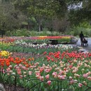 Signs of Spring Throughout Descanso Gardens