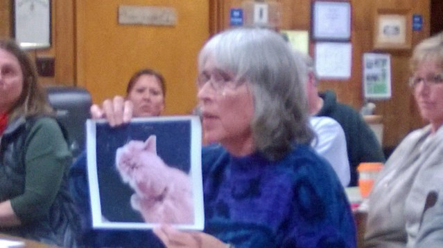 Ruth Fordon shows a photo of a cat, injured by another animail, possibly a dog  Photo by P. Vankevich
