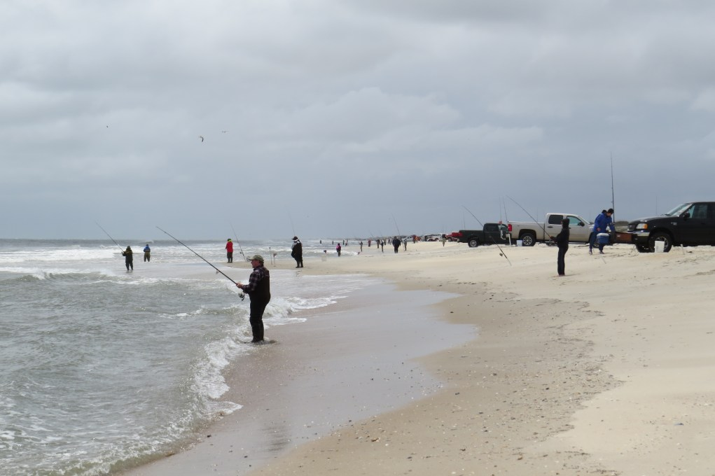 Fishing action Friday by the 426 fishermen and women in the 32nd Annual Ocracoke Island Surf Fishing Tournament. Photo by C. Leinbach